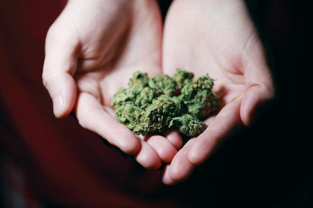 Making Sense of Medical Cannabis